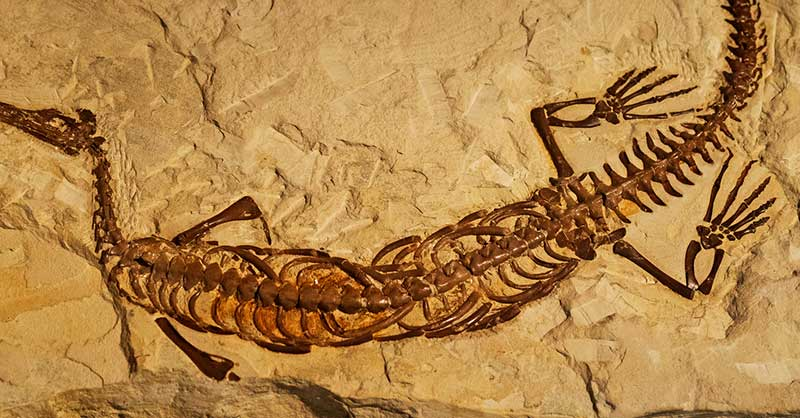 fossil-dating